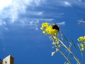 Birdseed Flowers